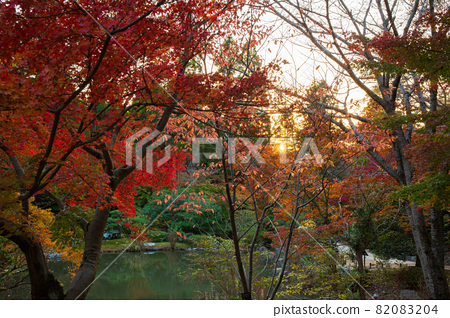 아이치 나고야의 가을 단풍의 히가시야마 동식물원 82083204