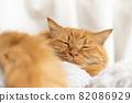 一隻貓的睡覺的臉 82086929