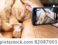 智能手機上的寵物,茶花貓 82087003
