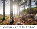 the concept of discovery and hiking, nature and freedom 82124423