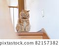 앉아있는 고양이 차 호랑이 고양이 82157382