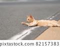 길거리에서 휴식 고양이 차 호랑이 고양이 82157383