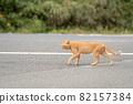 도로를 가로 지르는 고양이 82157384