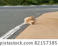 털 고르기 고양이 차 호랑이 고양이 82157385