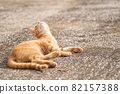 위가 신경 쓰이는 고양이 차 호랑이 고양이 82157388