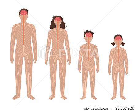 Central nervous system 82197829