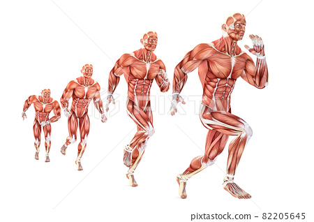 Running man anatomy. Medical illustration. Isolated. Contains clipping path 82205645
