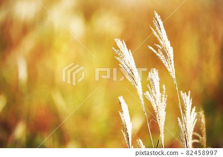 억새 이삭 가을 가을 이미지 82458997