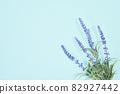 藍色背景複製空間植物 82927442