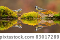 Great tit and eurasian blue tit standing on pond in fall 83017289