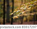 Colorful leaves hanging on tree in autumn nature focused 83017297