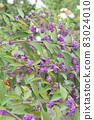 秋季紫色基布水果 83024010