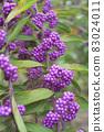 秋季紫色基布水果 83024011