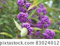 秋季紫色基布水果 83024012