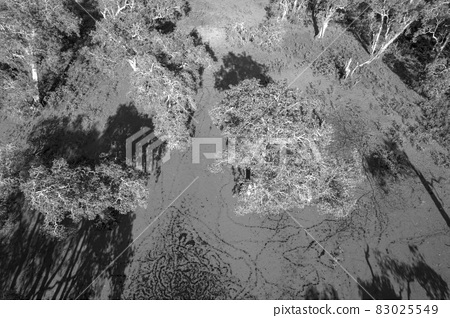 Black And White Top Down View Of Lagoon Covered With Algae 83025549