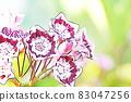 """파스텔 """"별 모양의 귀여운 카루미아 꽃""""일러스트 83047256"""