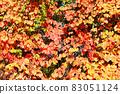 붉게 물든 산 포도의 잎 83051124