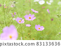 Cosmos (soft tone) 83133636