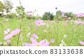 Cosmos (soft tone) 83133638