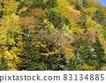 Autumn leaves of Asari Pass in Hokkaido 83134885