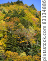 Autumn leaves of Asari Pass in Hokkaido 83134886