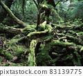 야쿠시마의 숲 83139775
