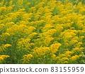 生長在河邊的一枝黃花 83155959