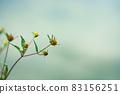 """아메리카센단구사 """"산야초"""" 83156251"""