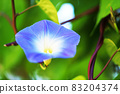 Refreshing morning glory flowers 83204374