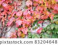 Ivy crawling wall 83204648
