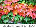 Ivy crawling wall 83204651