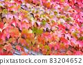 Ivy crawling wall 83204652