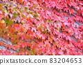 Ivy crawling wall 83204653