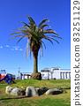有棕櫚樹的公園 83251129