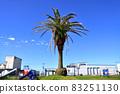 有棕櫚樹的公園 83251130
