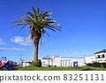 有棕櫚樹的公園 83251131