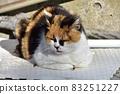 一隻貓在關節墊上熱身 83251227