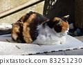 一隻貓在關節墊上熱身 83251230