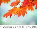"Pastel style ""Maple autumn leaves autumn image"" Illustration image 83265398"