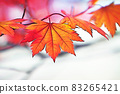 "Pastel style ""Maple autumn leaves autumn image"" Illustration image 83265421"