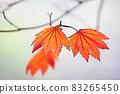 "Pastel style ""Maple autumn leaves autumn image"" Illustration image 83265450"