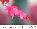 "Pastel style ""Maple autumn leaves autumn image"" Illustration image 83265544"