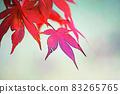 "Pastel style ""Maple autumn leaves autumn image"" Illustration image 83265765"