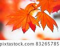 "Pastel style ""Maple autumn leaves autumn image"" Illustration image 83265785"