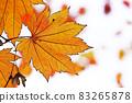 "Pastel style ""Maple autumn leaves autumn image"" Illustration image 83265878"
