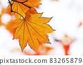 "Pastel style ""Maple autumn leaves autumn image"" Illustration image 83265879"