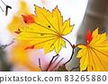 "Pastel style ""Maple autumn leaves autumn image"" Illustration image 83265880"