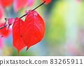 "Pastel-like ""colored cherry blossom leaves"" illustration image 83265911"